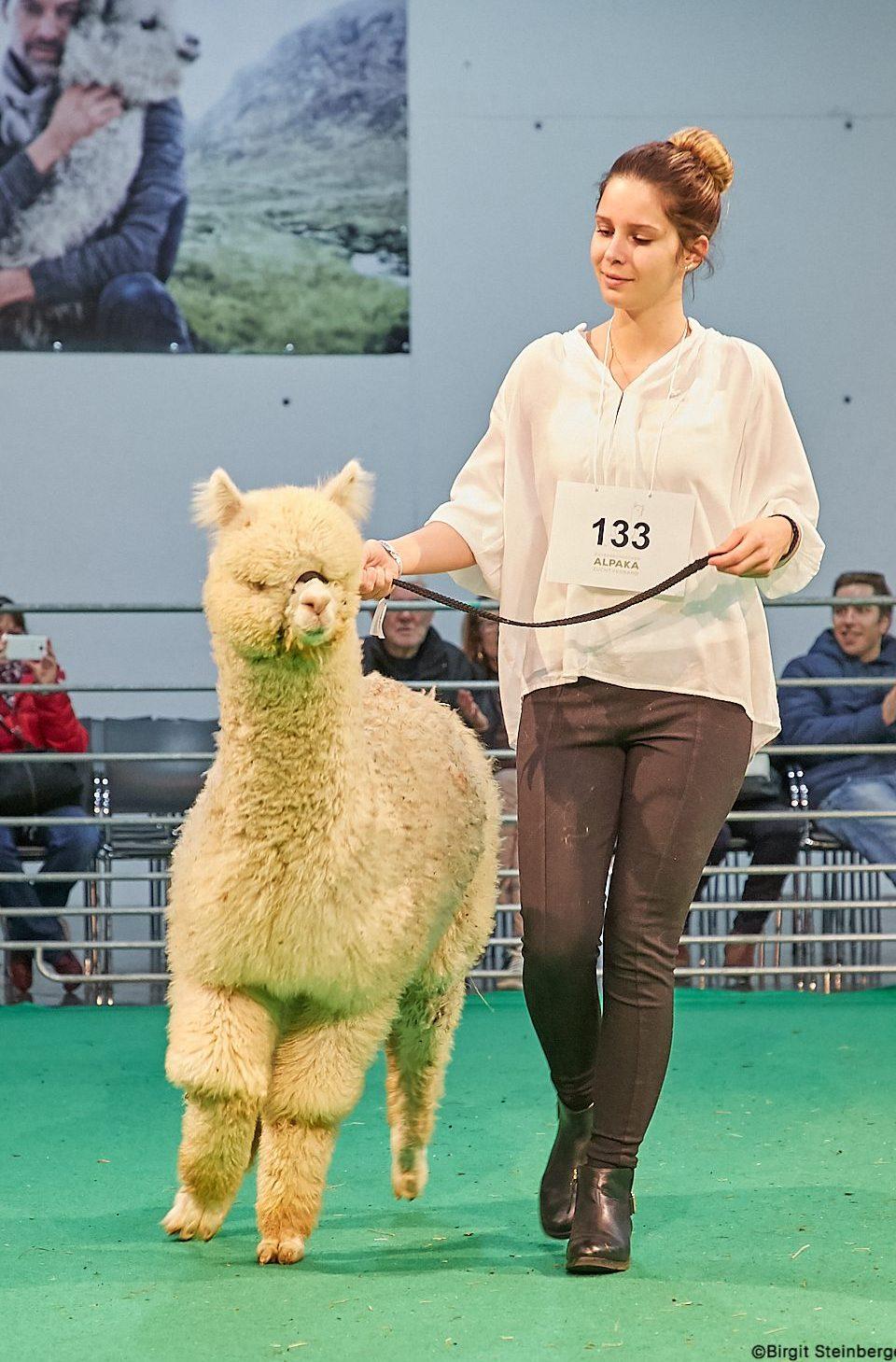 600 Alpakas und 200 exklusive Aussteller erwarten sie 2022 in Graz
